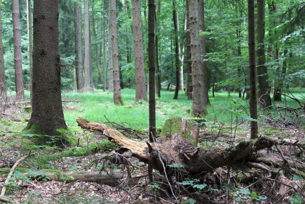 Baumwipfelpfad_Steigerwald-Waldspaziergang-Ebrach (10)