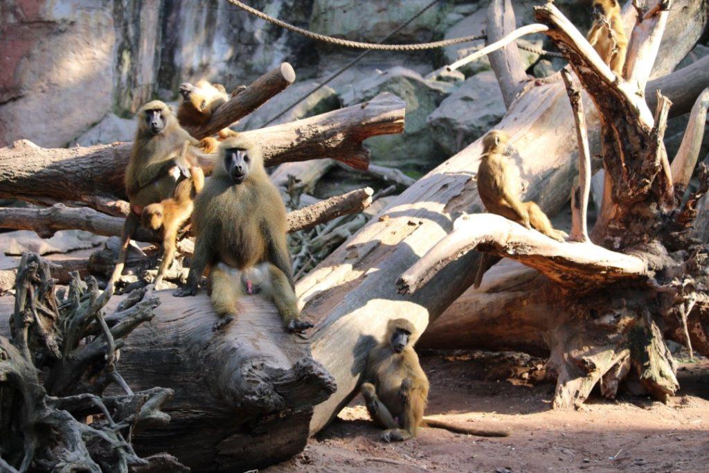 Tiergarten Nürnberg - Familienausflug - Affen