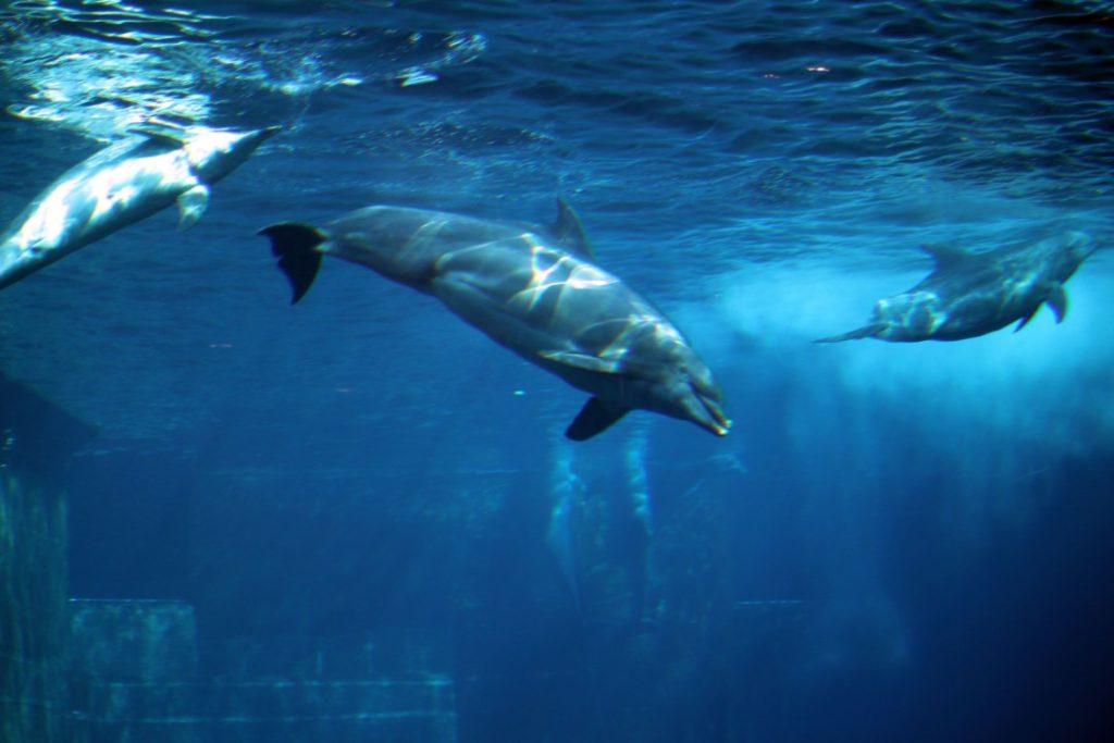 Tiergarten Nürnberg - Familienausflug - Delfine