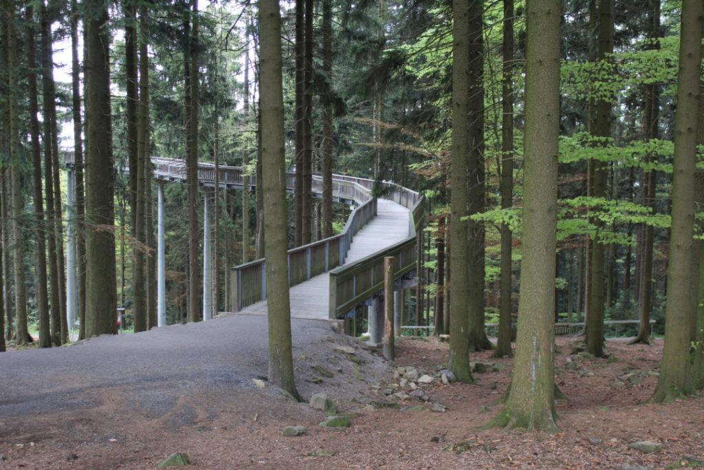 Bayerischer Wald - Wald Wipfel Weg 3