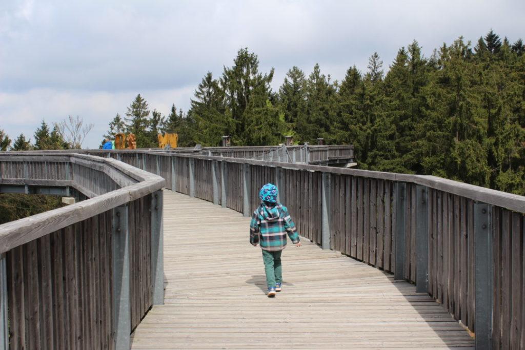 Wald Wipfel Weg