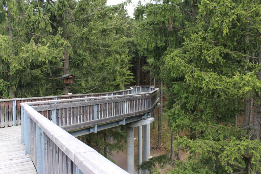 Wald Wipfel Weg - Bayerischer Wald