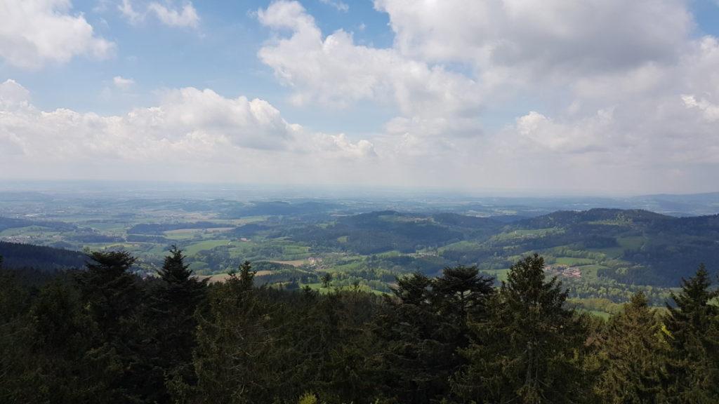 Wald Wipfel Weg - Panoramablick