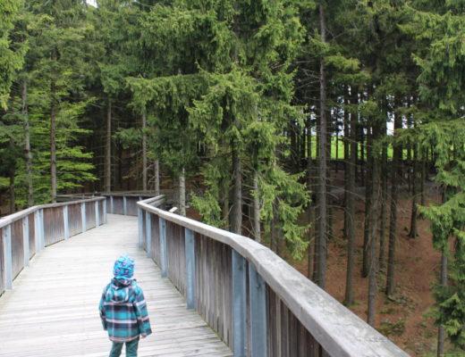 Wald Wipfel Weg - Panoramaweg