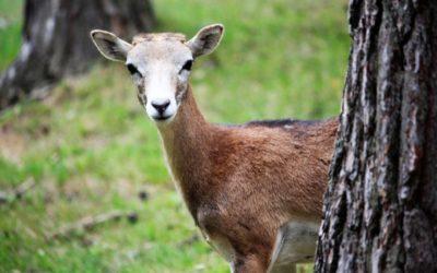 Besuch im Wildpark Hufeisen im Veldensteiner Forst
