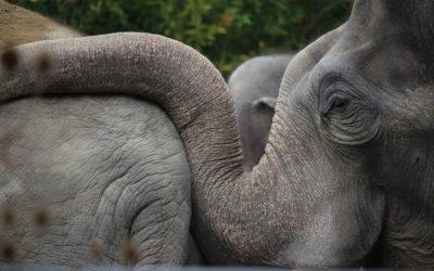 Familienausflug: Tierpark Hellabrunn in München