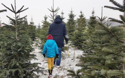 Unsere neue Familientradition – Wir schlagen unseren Weihnachtsbaum selbst